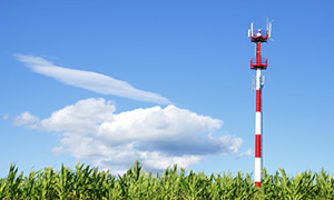 Cell Phone Tower in Corn Field